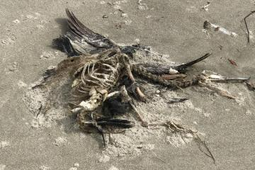 One of 9 dead sea birds
