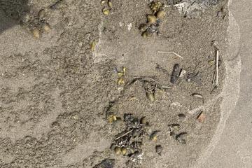 Tide line debris along mile 313 and 314