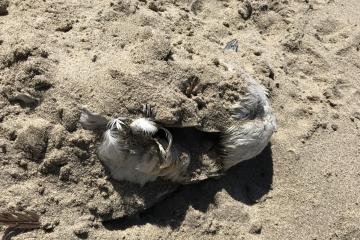 unidentified dead bird
