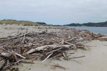 Driftwood debris at Alsea Bay 3-26-2021