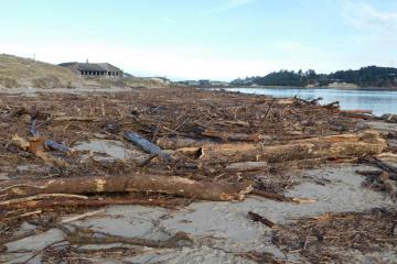 Driftwood debris, north shore of Alsea Bay