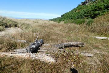 Driftwood in dunes