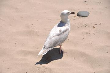 Gull in the sand