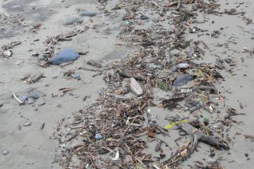 Plastic debris in driftline