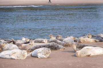 Happy harbor seals.