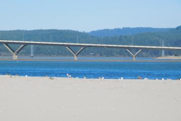 Gulls at edge of Alsea Bay