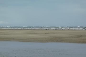 Gulls at shore
