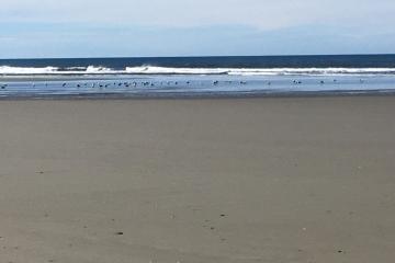 Whisky Run Beach facing west