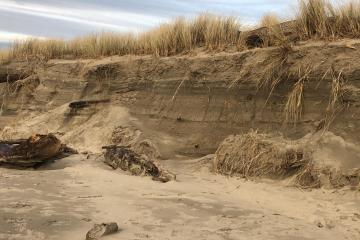 Steep 7-10 foot vertical edge cut into the dunes by the king tides