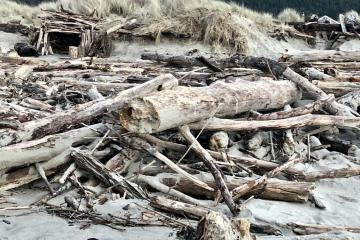 King tide logs, a new fort, and a roof of a home now closer to the sea's edge