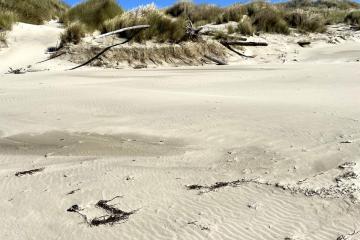 Winter Dune Erosion Remnant