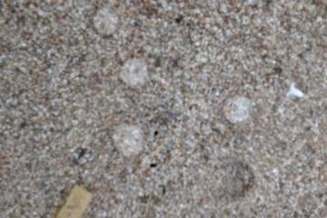 Gelatinous-like invertebrates (?) at shoreline.