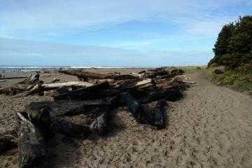 Remains of driftwood log fire