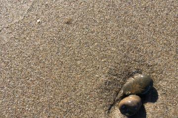 glassy, dime sized jellies adorn the surf line