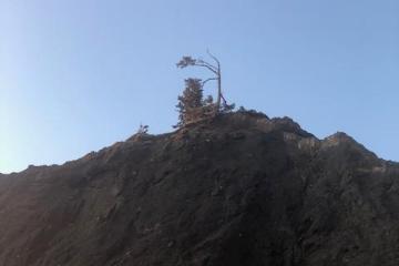 north cliff tree