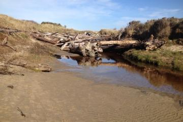 Driftwood piled up in tributary.