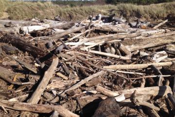 Closeup of accumulated driftwood