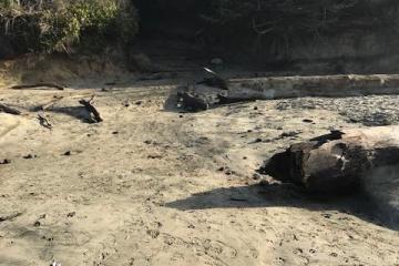 Washburne Beach logs