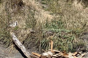 Close up of debris pile