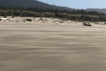 Sand infill against the foredune