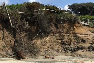 Vegetation collapse