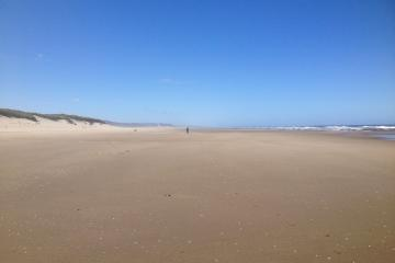 Off-leash dog on Siltcoos Beach