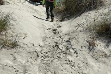 Blocked off ATV entrance over the foredune.  It is filling with sand
