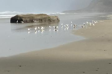 Seagulls hanging out on the beach