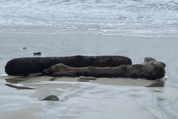 Driftwood logs at the base of the stairs to the beach