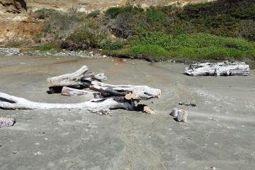 Sawed driftwood south of Thiele Creek