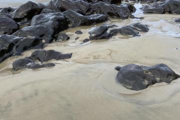 Exposed rocks along beach