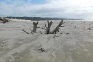 Landmark Driftwood 3-26-2021