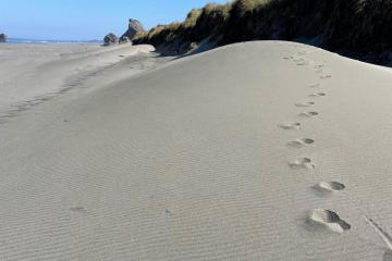 Sand dunes forming