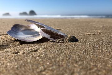 Broken sea shell Crescent Beach