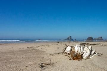Seashell and bird rocks Crescent Beach