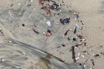 Example of plastics in debris line all along beach