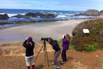 Audubon volunteers/ Black Oyster Catcher survey