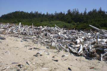Piles of driftwood logs are choking the water outflow at the inlet