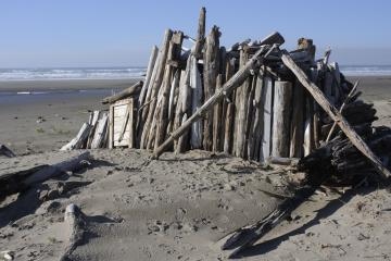 Driftwood shelter (about 8x16 feet) with evidence of fire at the rear (right).  Other smaller logs in the area also showed evidence of fire.