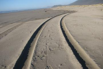 Vehicles are not allowed on this beach and this was the first time I'd ever seen vehicle tracks.  They appear to be relatively fresh and to have been made by a truck of some type.  Will need to monitor for this in the future.