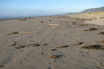 This view shows both the high and low-tide zones on mile 288 when looking north.  Other than wood, logs, and kelp, the beach is pretty clean.