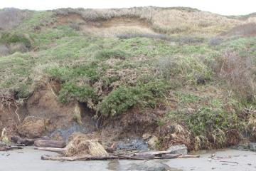 Erosion near beach level, some likely due to recent storms.