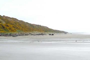 View of Whisky Run Beach at very low tide, looking south along Bullards Beach almost to Bandon. Whisky Run (the creek) at far left. You can see how gorse (yellow) completely dominates the bluffs.