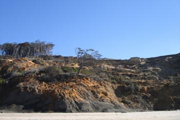 Shore Pine half way down landslide scar (from 13 years ago).