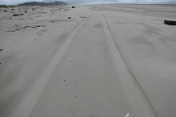 For the second straight outing here, I saw tire tracks.  These appear to be made by a large SUV or pick-up type vehicle.  Hard to tell how they got on beach unless from Cape Meares over three miles to the south.