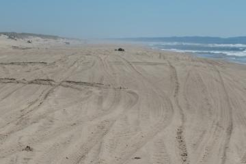 In places, the ATV tracks were so pervasive that they completely covered the beach all the way from the foredune down to the waves.