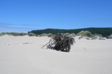 Large driftwood tree root on mile 147.