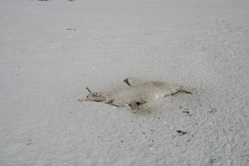 Dead Seal on Mile 152 just before the creek.