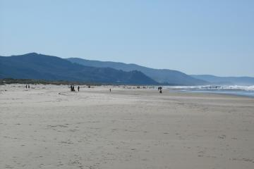 Lots of beach walkers today!