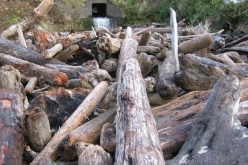 Cape Cove and the logs.